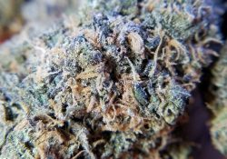 street lawyer services dc grandaddy purp weed photo