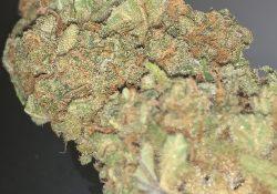 green kings dc banana kush weed photo