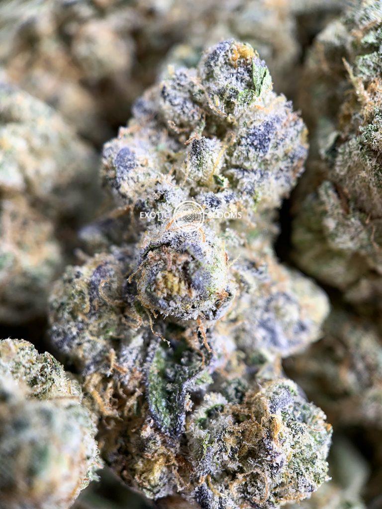 exotic blooms dc london poundcake marijuana macro photo