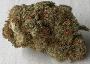 bagged buds super silver haze weed photo