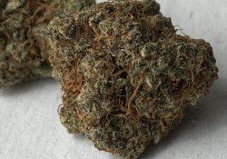 exotic organics dc og cookies weed photo