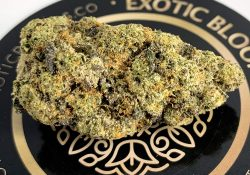 exotic blooms dc pop rox weed photo