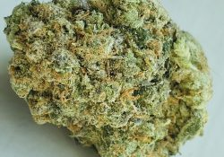 exotic organics dc alpha blue weed photo