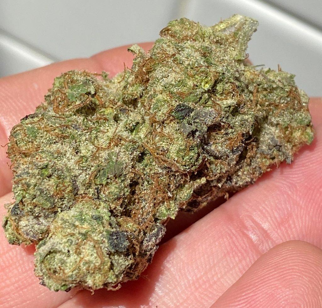 hidden leaf dc cookies cream marijuana flowers