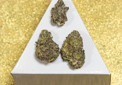 gifted curators dc sunset sherbet weed photo