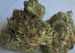 heady club dc trifi cookies weed photo