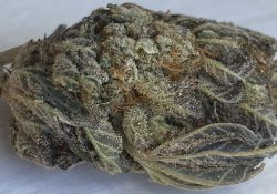 peace in the air dc platinum uprising weed photo