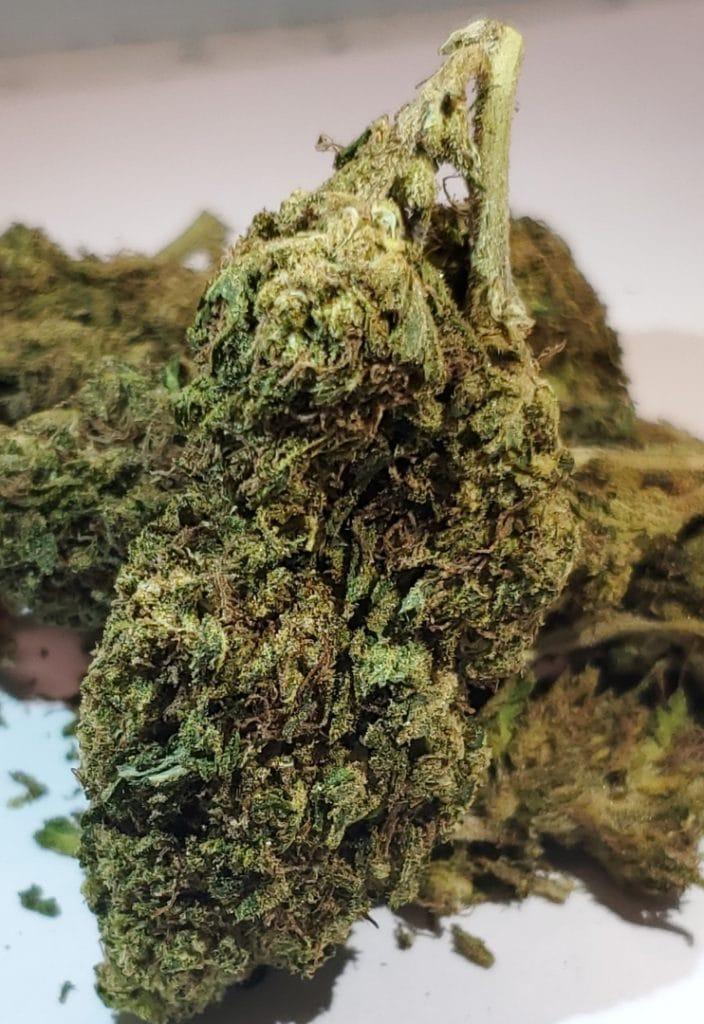 select co op dc alaskan thunderfuck weed photo