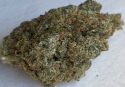 baked dc dutch treat weed photo