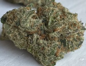 gifted curators dc dosi white weed photo