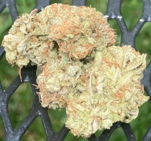 peace in the air dc rainbow sherbet weed photo