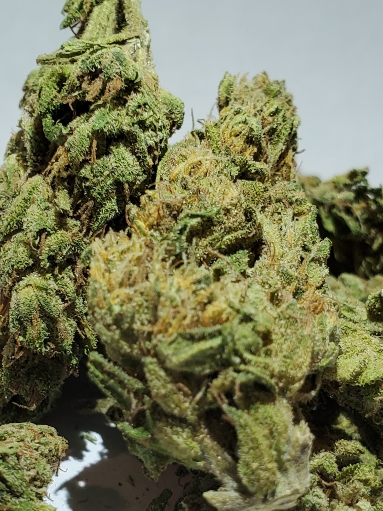 select co op dc in the pines weed photo