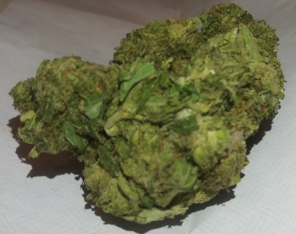select co op dc scout kush weed photo