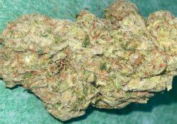 lucky chuckie dc big smooth weed photo