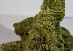 select co op dc blue crack weed photo
