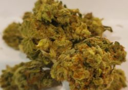 select co op dc dragon og weed photo