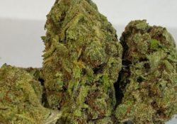 select co op dc lemon fire og weed photo