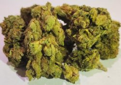 select co op dc mendo mix weed photo
