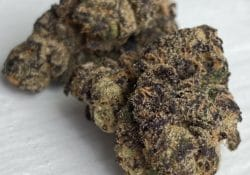 baked dc black sherb weed photo
