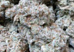 green kings dc gg4 weed photo