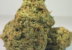 select co op dc nectar weed photo