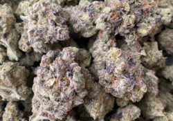 select co op dc red dragon weed photo