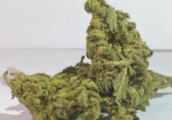 select co op dc sour diesel weed photo 9/2/20