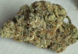 baked dc glookies weed photo