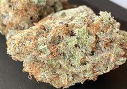 heady club dc purple candy weed photo