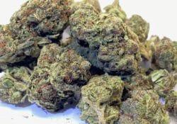 select co op dc animal mintz weed photo