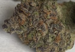 baked dc purple dream weed photo