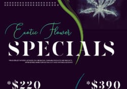 puff kings dc exotic flowers flyer