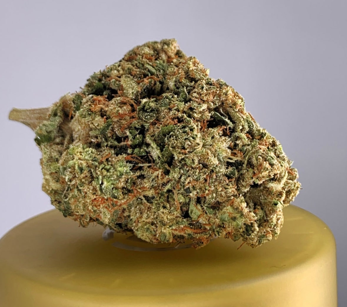 district connect motorbreath weed photo