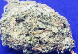 lucky chuckie dc blue dream weed photo 11/29/20