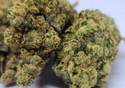 lucky chuckie dc jungle cake weed photo