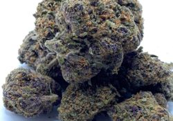 select co op dc forbidden fruit weed photo