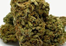 select co op dc I95 Kush weed photo