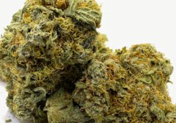 select co op dc strawberry fields weed photo