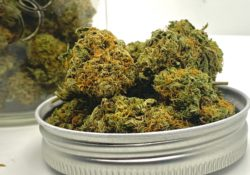 athenas gifts dc tangerine dream weed photo