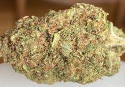 heady club dc critical orange punch weed photo