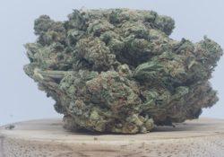 lucky chuckie dc alaskan thunder weed photo