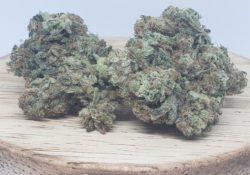 lucky chuckie dc king kush weed photo