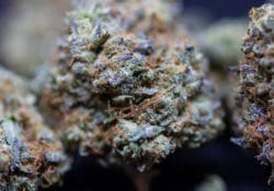 peace in the air dc ice cream cake weed photo