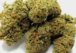 select co op dc white gorilla weed photo