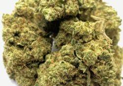select co op dc zookilato weed photo