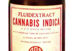cannabis fluid extract american druggists syndicate historical image