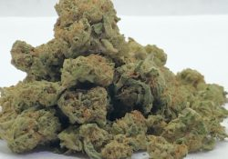 cherry pie select co-op dc weed photo