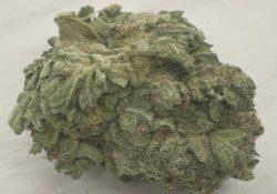 athenas gifts dc durban poison weed photo