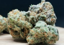 lucky chuckie dc go time weed photo