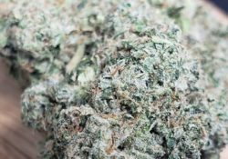lucky chuckie dc ghost og weed photo